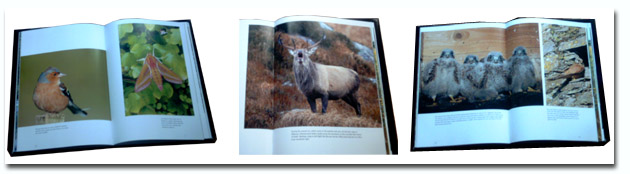 Examples from Mike Brown's excellent book of Irish wildlife photographs